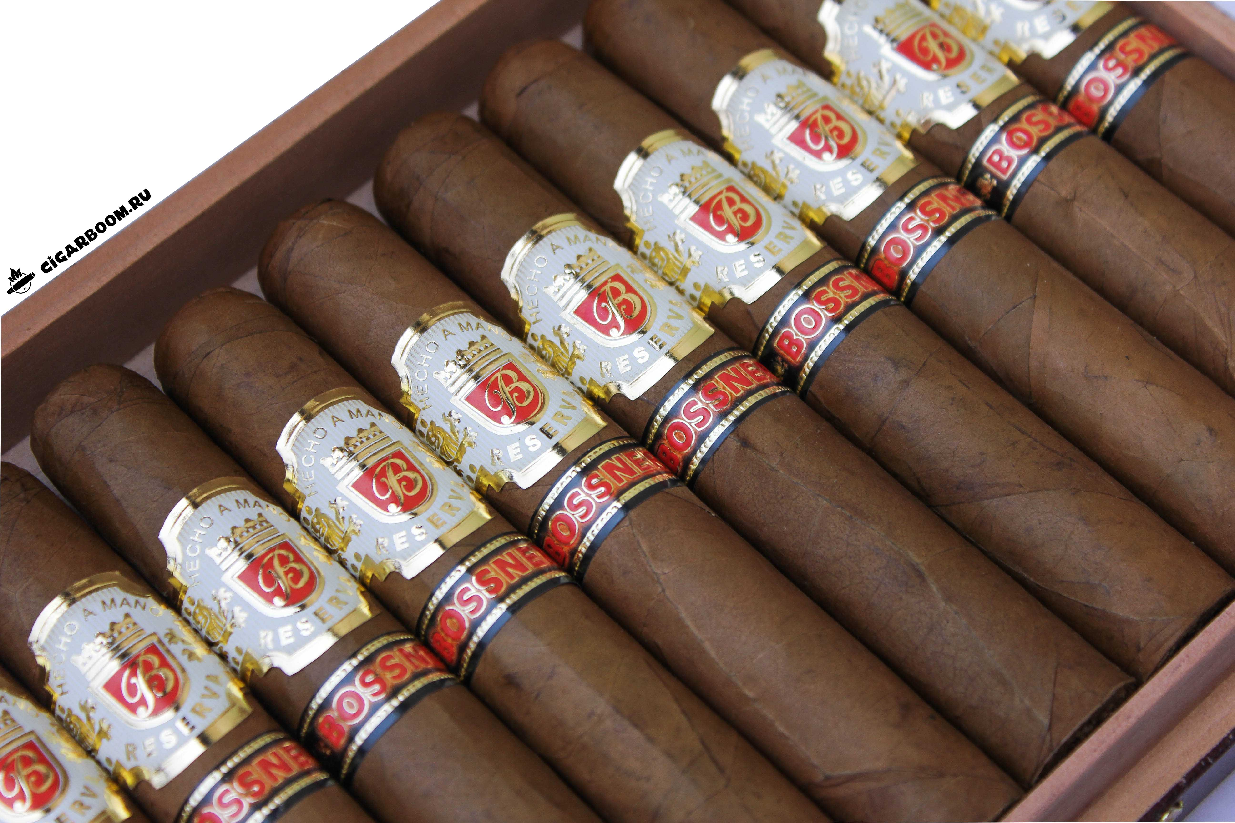 Bossner-Robusto-17